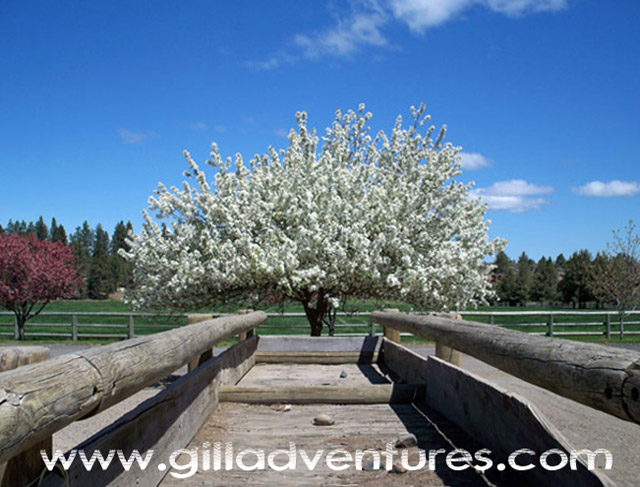 Rock Springs Guest Ranch in bloom