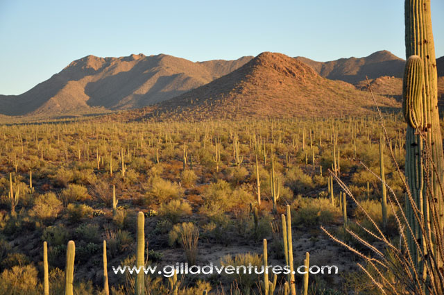 Images of hiking and the desert Tucson