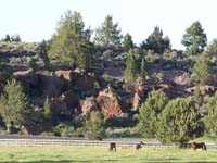 Rock springs guest ranch