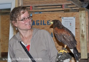 Holding Sid, the Harris Hawk.