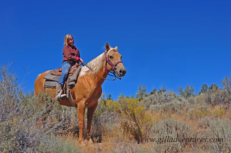  Palomino horse with young rider