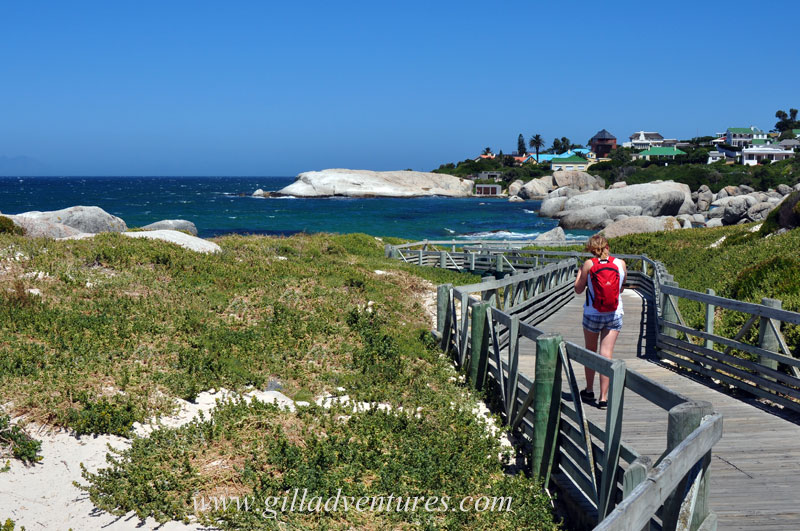 They&#039;ve built wooden walkways like this one at Boulders Beach, so the human visitors can watch the penguins without disturbing their lives or homes.