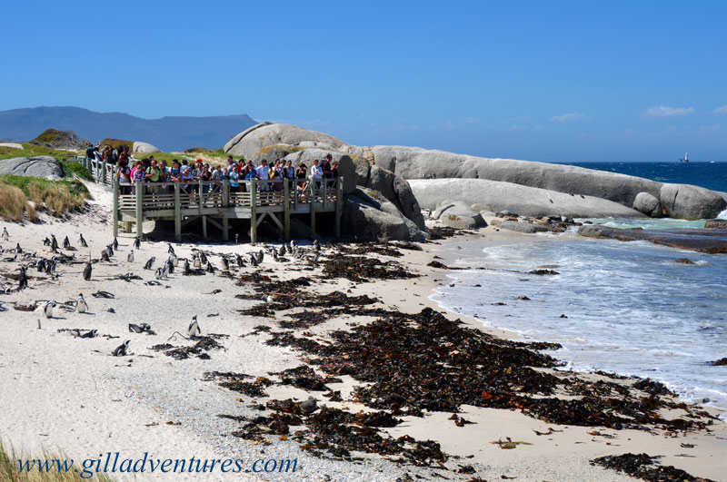 The main viewing deck for watching the penguins at boulders beach, simon&#039;s town, south africa.