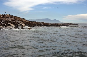 Seal Island, in False Bay, South Africa. Photo taken on our trip around the world.