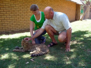 Visiting with a cheetah cub at Cango Wildlife Ranch