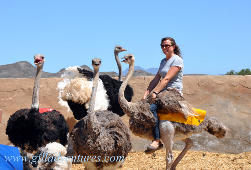 Riding an ostrich during our trip around the world.