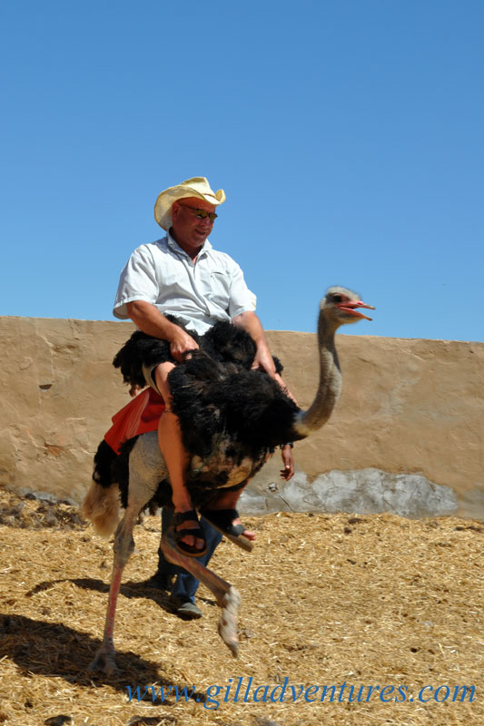 John riding an ostrich