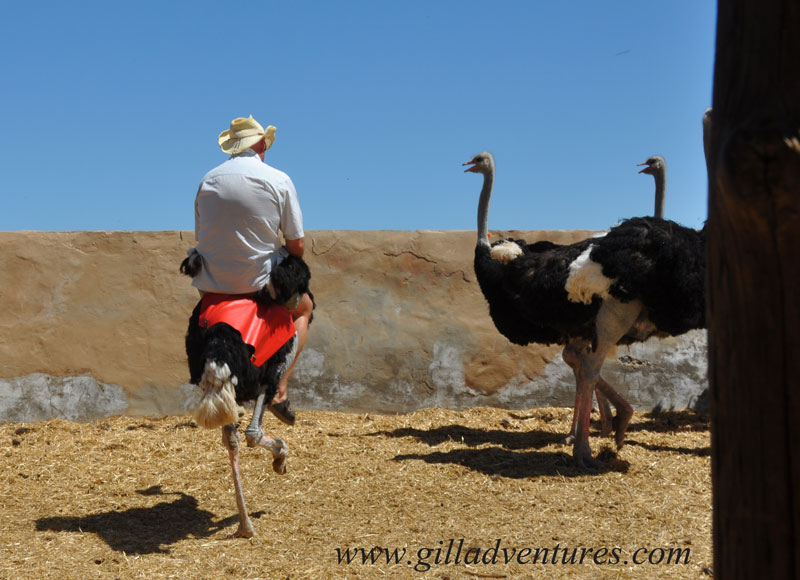 ostrich riding in South Africa