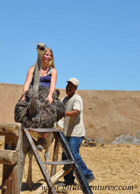 My daughter riding an ostrich in South Africa during our trip around the world