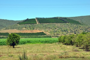 Citrus groves and crop lands in the Gamtoos River Valley, South Africa