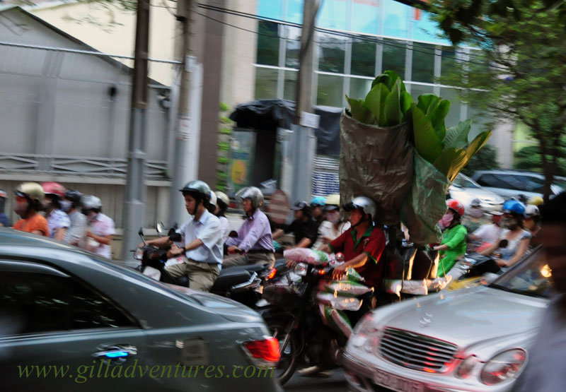 A man carrying large plants on his motorcycle in Ho Chi Minh City. Photo taken during our trip around the world with out teen children.